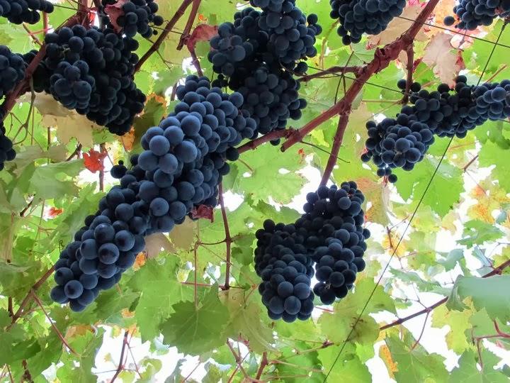 Định nghĩa Rượu Vang - Rượu vang là gì